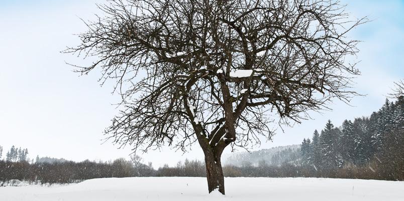 slide_zima